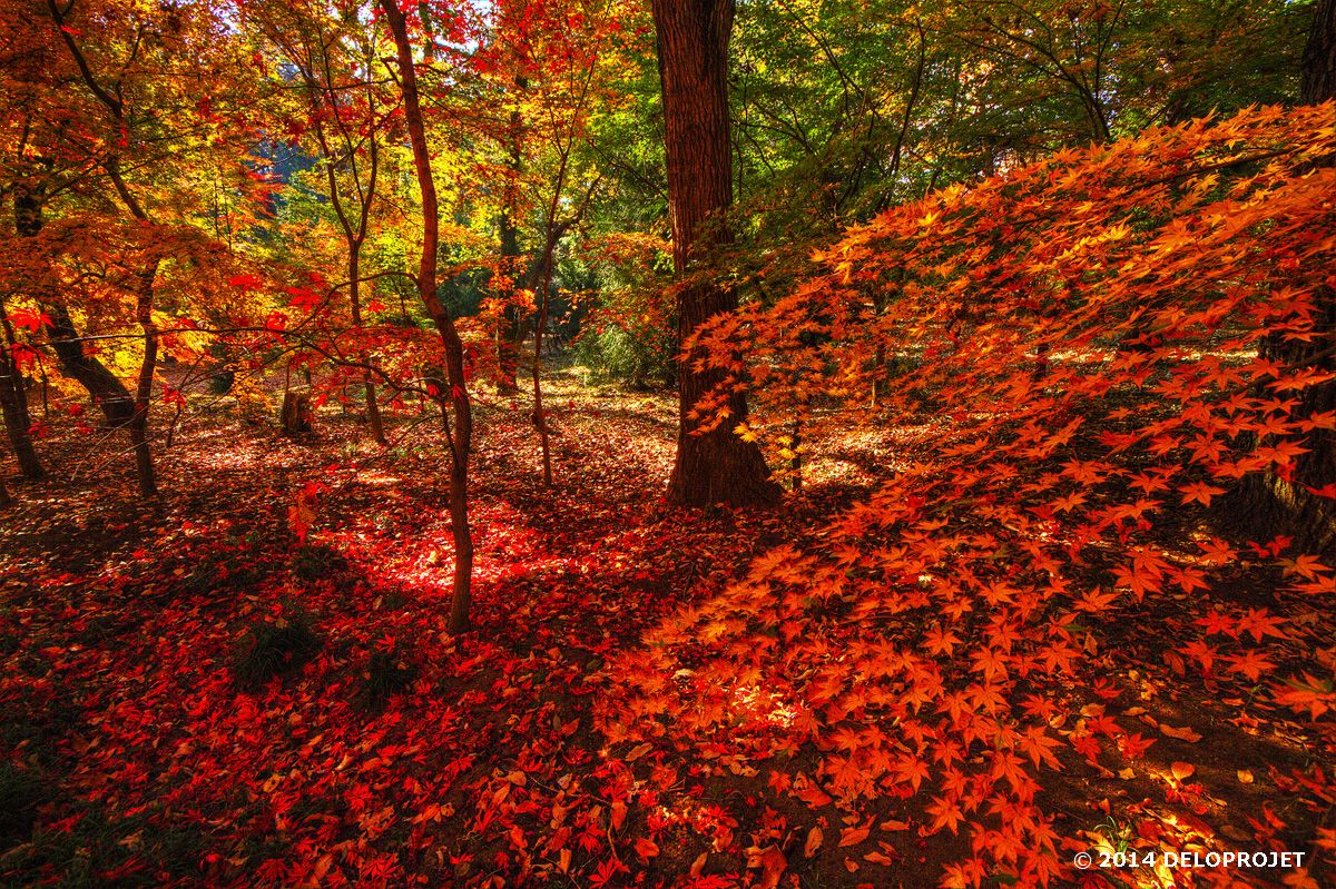 The delight of photographers hunter of autumn
