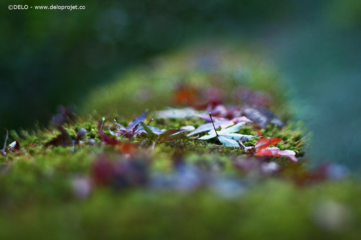 Amazing nature green in autumn photography